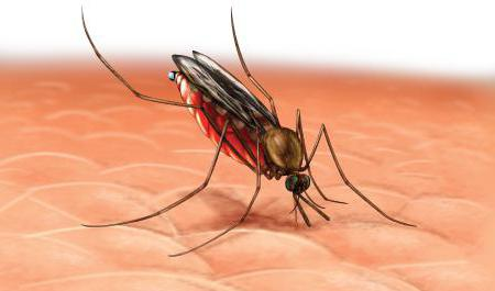 veliki komarac kako ga zovu