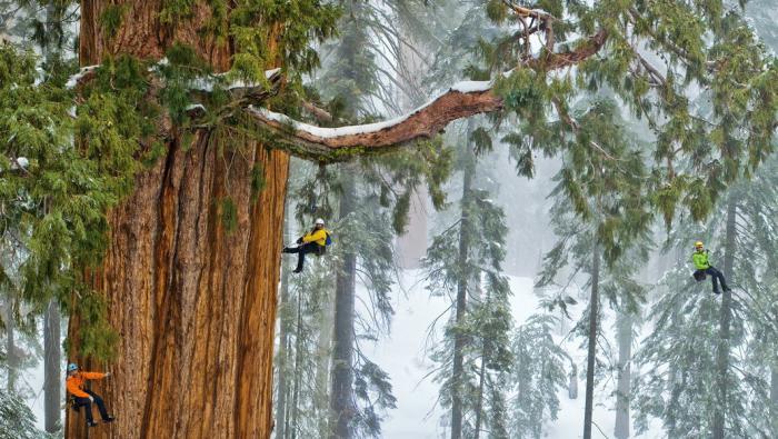 największe i najstarsze drzewa