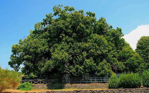Największe drzewo na świecie
