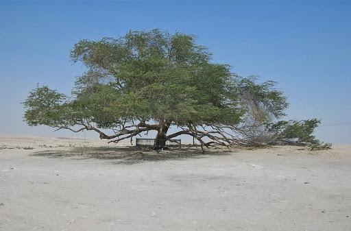 dziesięć najbardziej niesamowitych drzew na świecie