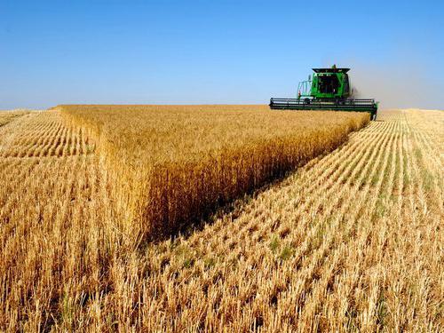proizvodnja žitarica