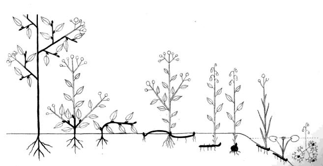Forme di vita delle piante