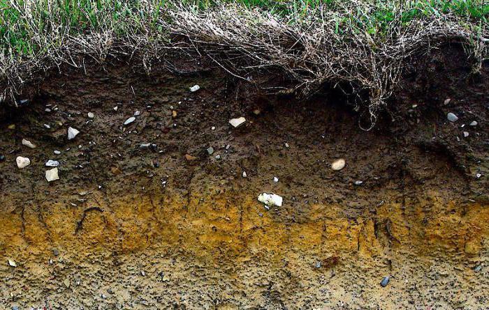 steppa del suolo