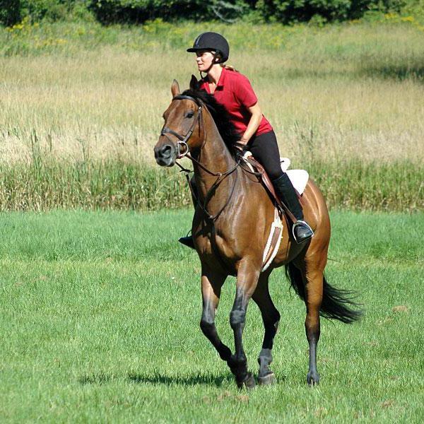 velocità del cavallo km h