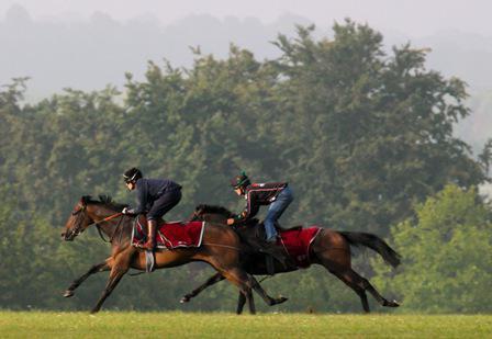 tipi di cavalli che corrono