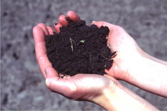състав на почвата