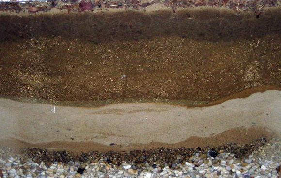 минерален състав на почвата