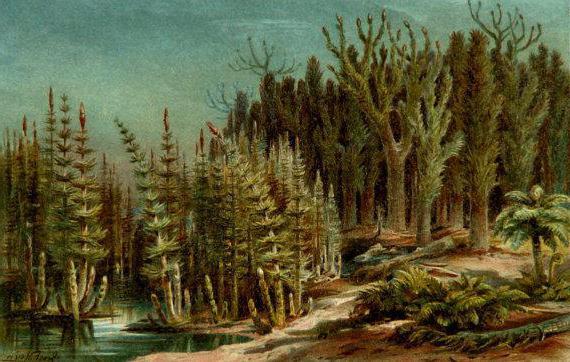 najstarsze rośliny na ogonach mchów ziemi