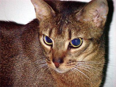 foto dei gatti più belli