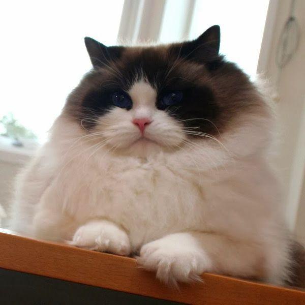 top gatti più belli