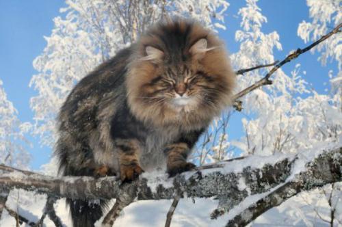i 10 migliori gatti più belli