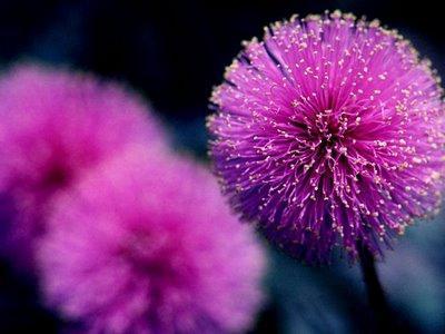najljepši cvijet na zemlji