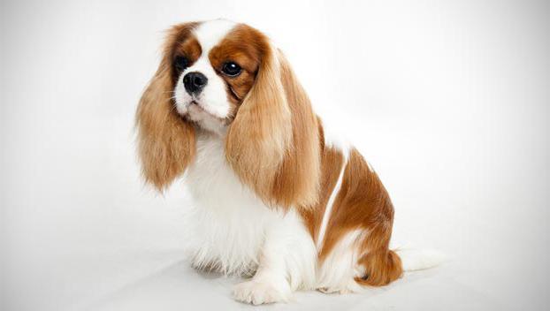 най-скъпите породи кучета