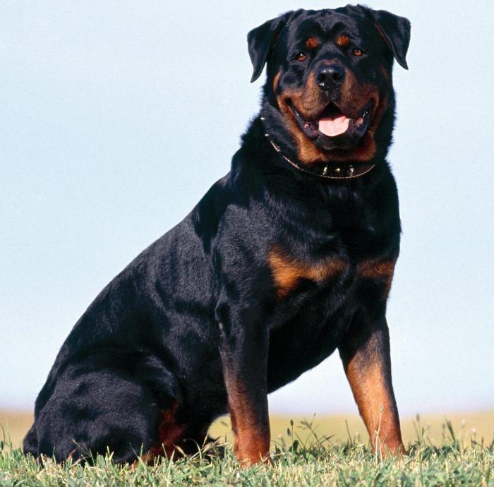 скъпи породи кучета в Русия
