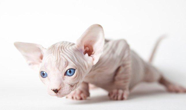 најскупља мачка фотографија