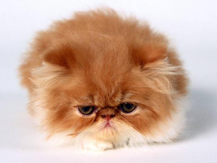 трошкове мачака