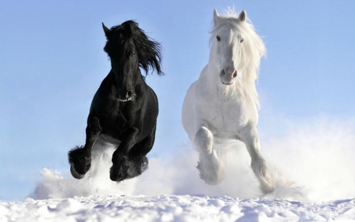 nejdražším koněm na světě je merlin