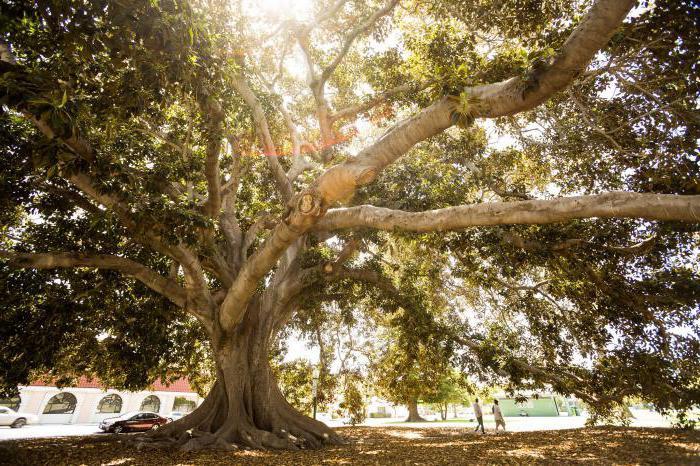 Drveće svijeta