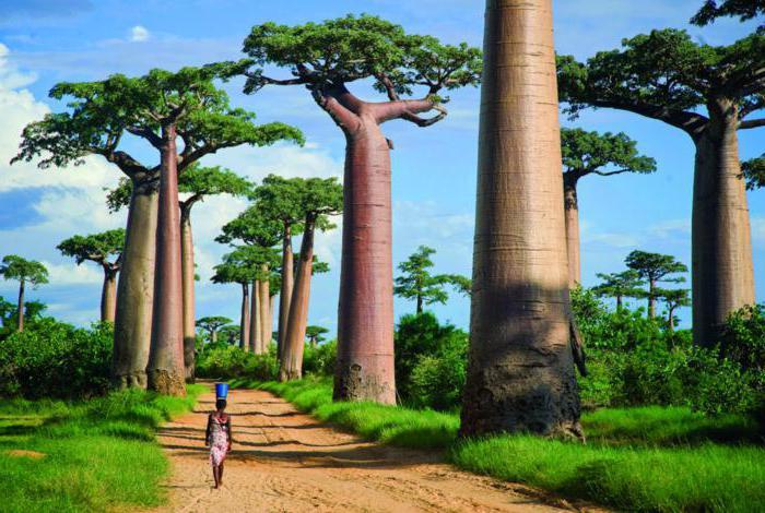 Vrste stabala na svijetu