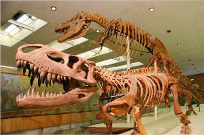 Museo Paleontologico di Mosca