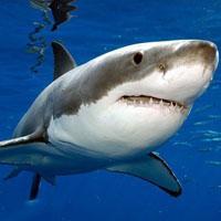 fauna selvatica dell'oceano Atlantico