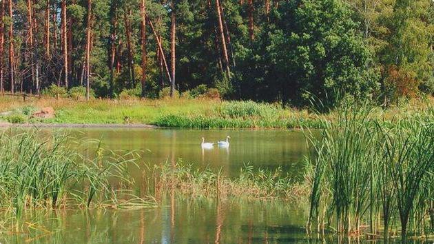 diversità della natura della regione di Voronezh