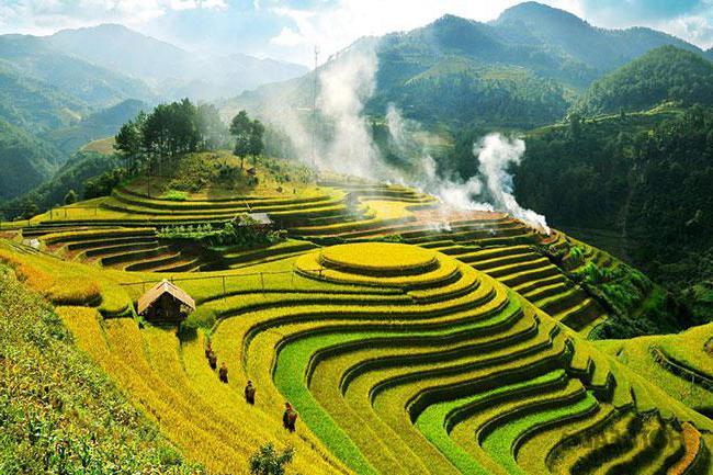 kuhani riž hranilno vrednost