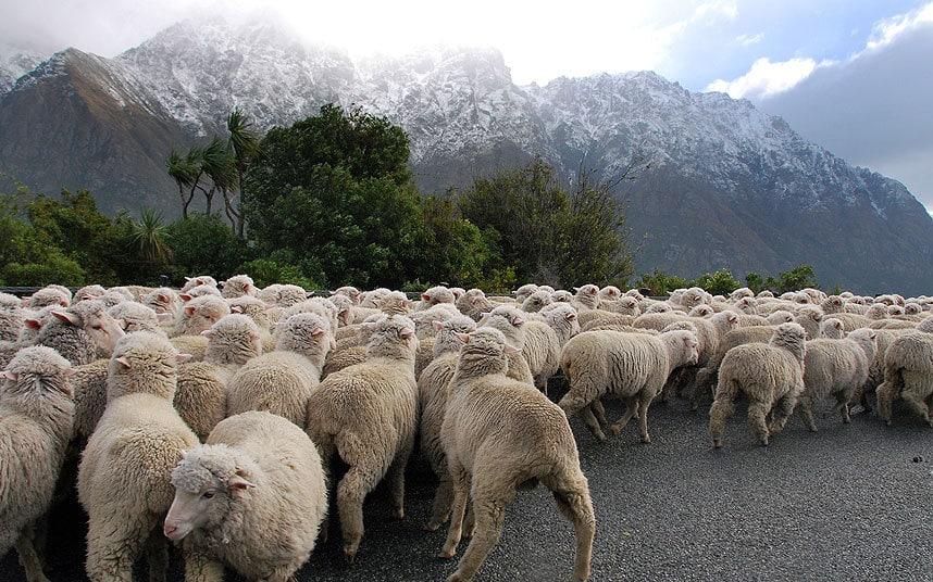 географија Новог Зеланда