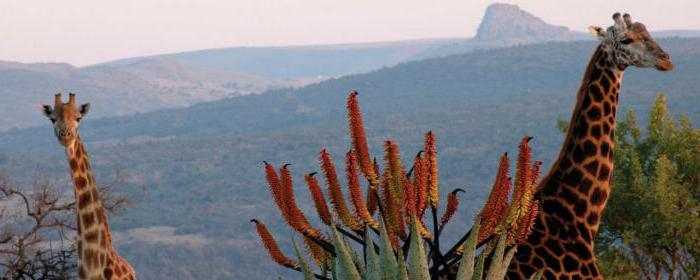 principali città del Sud Africa
