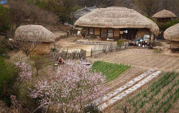 ludność Korei Południowej