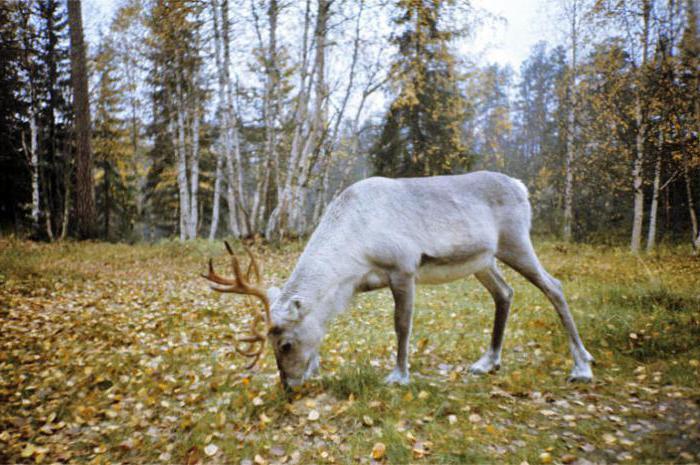 Državni prirodni rezervat biosfere u Laplandu