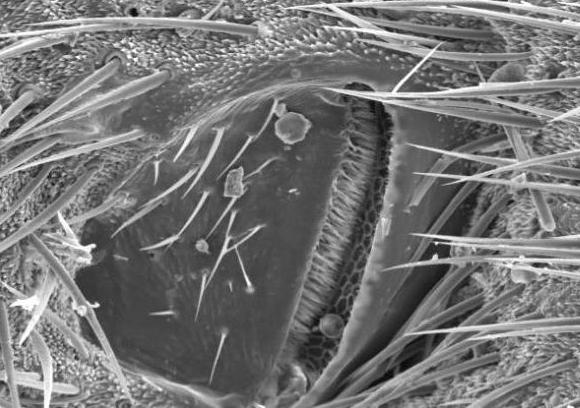 насекомите дишат