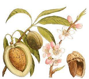 Predstavnici obitelji Rosaceae