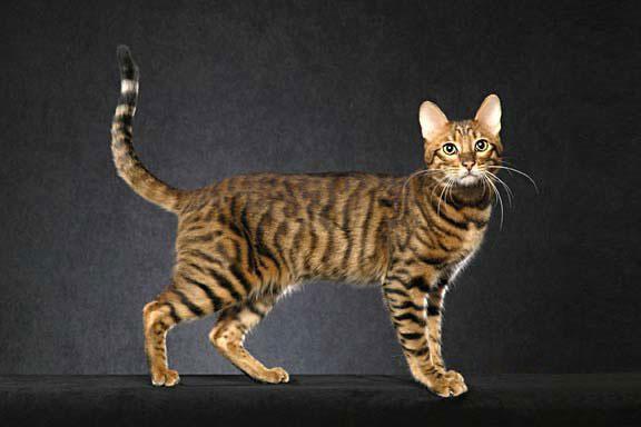 slatka i uska maca