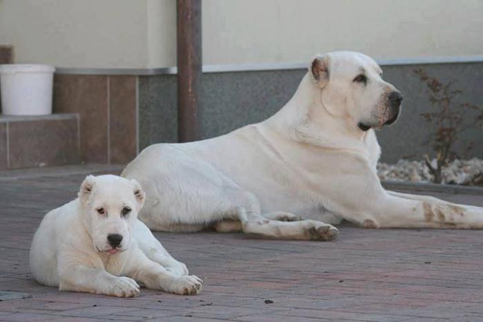 това, което е най-силното куче в света
