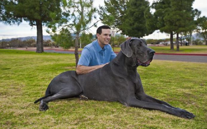 Топ 10 на най-опасните породи кучета в света