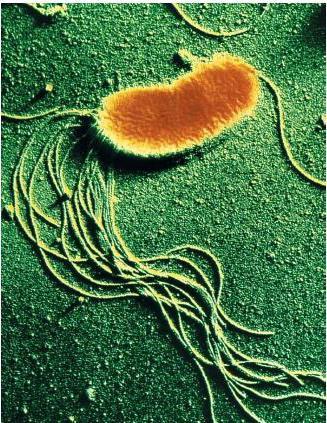 La struttura e l'attività dei batteri.
