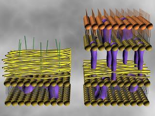 Struttura cellulare dei batteri.