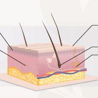 struttura di capelli umani sulla testa