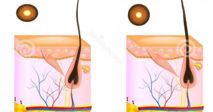 foto della struttura dei capelli
