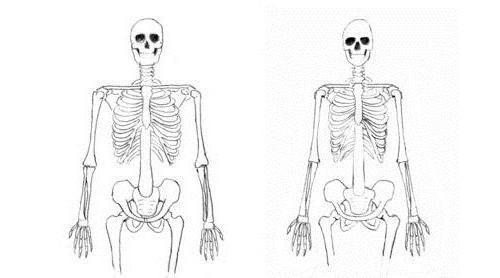 schéma struktury lidské hrudníku
