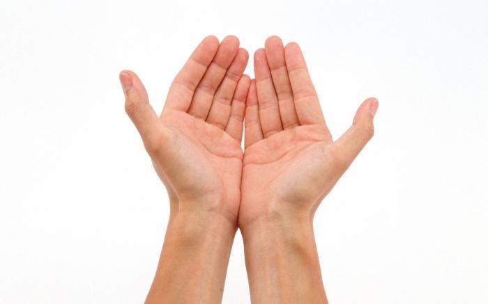 struktura človeške roke