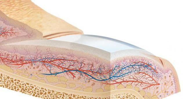 Struktura systému nehtů