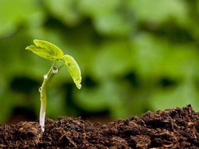 стойност на фотосинтезата
