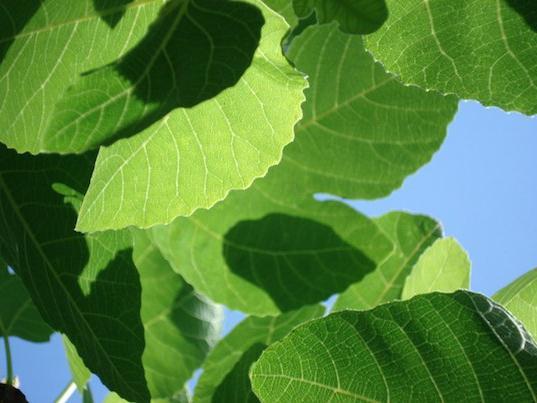 ролята на фотосинтезата