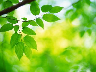 значението на фотосинтезата в природата