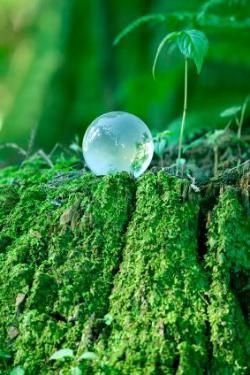 фази на фотосинтеза