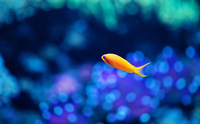 риба у сну за жену
