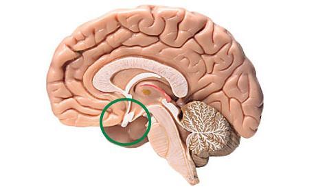 тироиден стимулиращ хормон