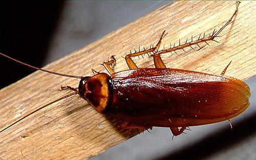 sanjaj ščurke v sanjah